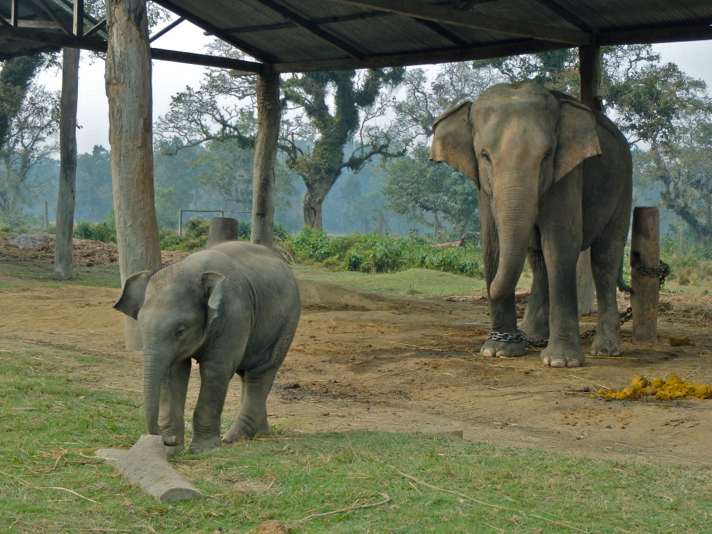 going on safari in nepal chitwan travel blog for solo female travellers travel in nepal places to go in nepal