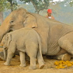 Visit Chitwan National Park: The Jungle of Nepal