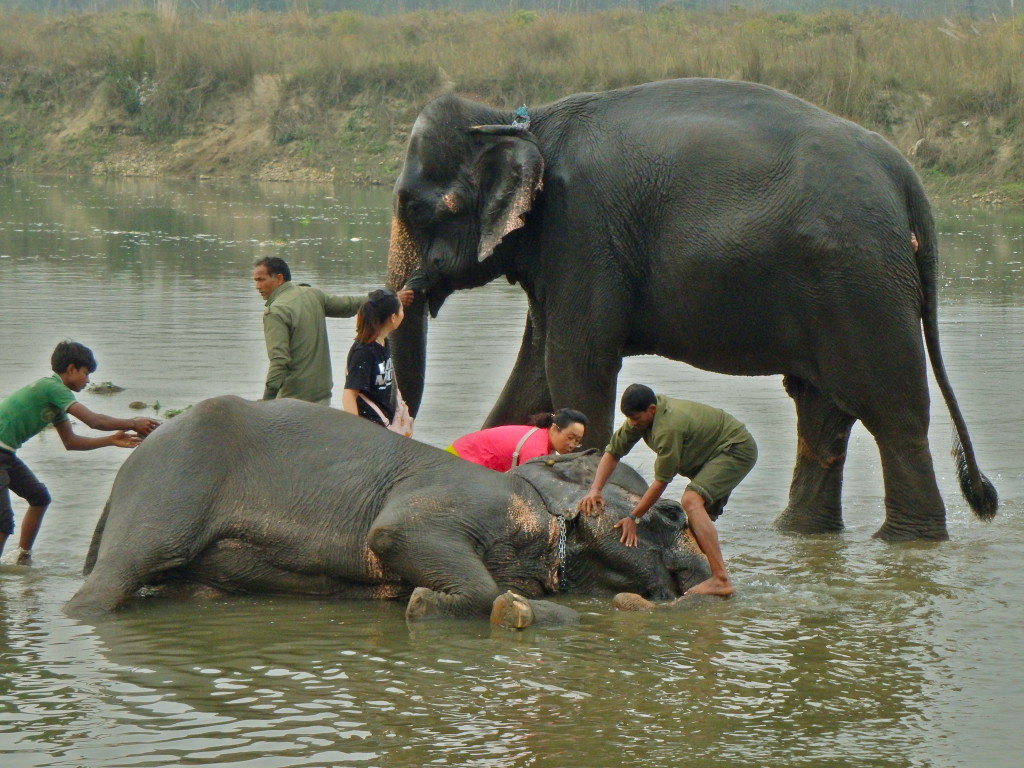 best experiences in nepal where can I see elephants in nepal best places to see wildlife in nepal