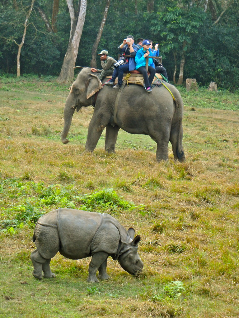 Chitwan Rhinos on elephant safari in nepal top travel experiences in nepal where to visit in nepal best travel blogs from nepal