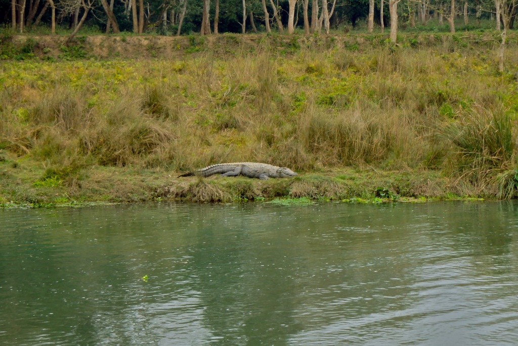 crocodiles in chitwan nepal places to visit in chitwan nepal travel blog for solo women