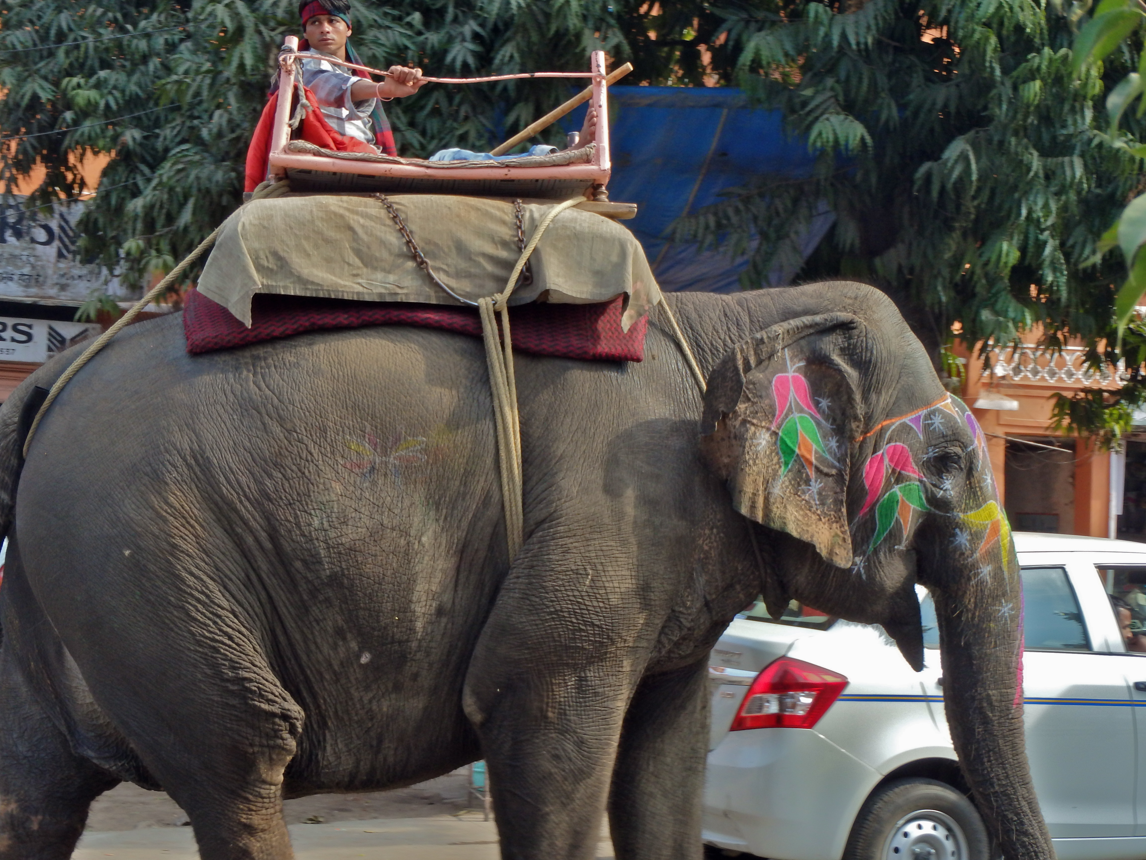 Working Elephant in Jaipur, India elephants on the streets of india what to see in jaipur for women travellers can women travel safely in india?