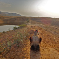 "Riding Camels in Pushkar (A ""Desert"" Safari in India)"