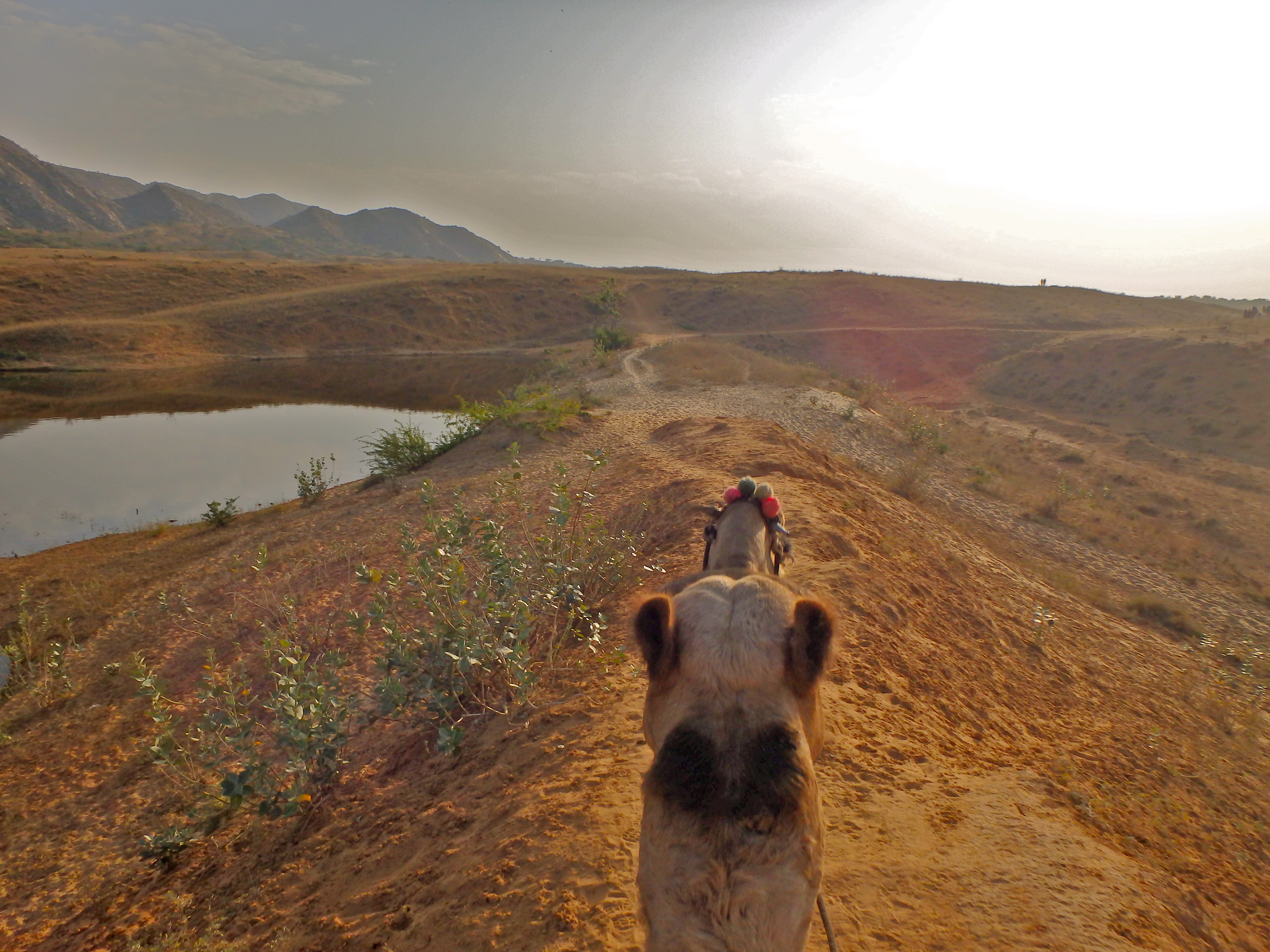 riding camels through the desert in india best experiences in india how to visit pushkar india