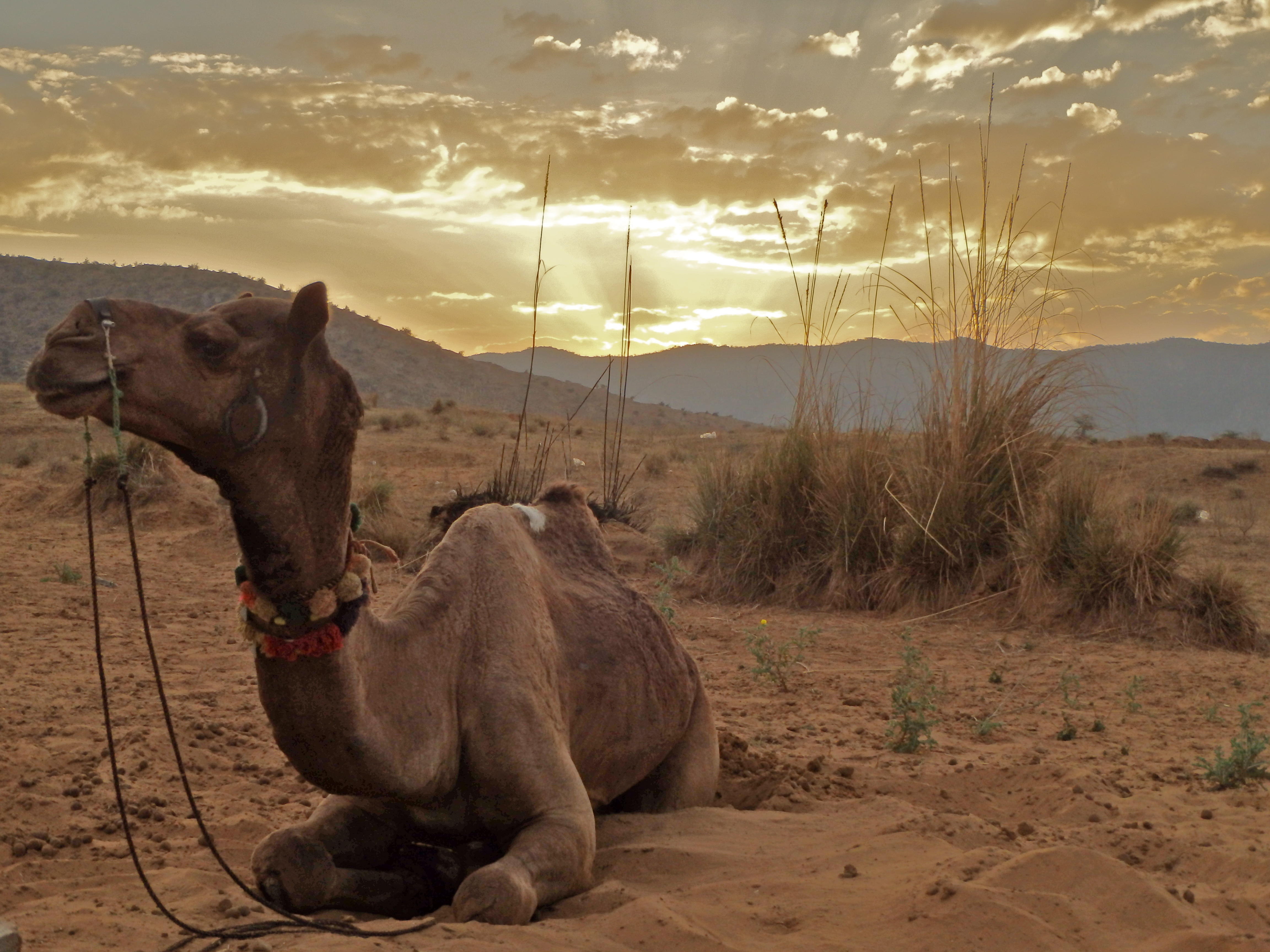where to see the best sunset in india how to ride a camel in rajasthan where to go to ride a camel