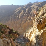 Peru's Colca Canyon Trek and Birdwatching at the Cruz del Condors