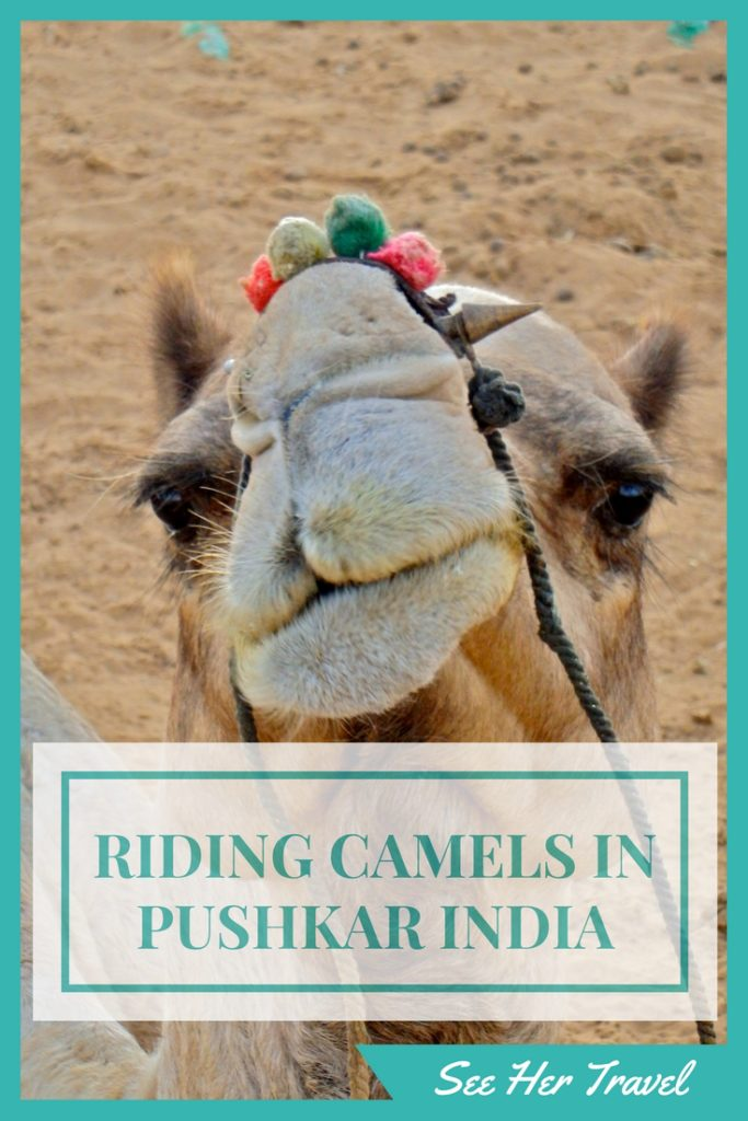 Riding a camel into the desert of India is unforgettable, for many reasons. Check out this blog about my 'desert' safari out of Pushkar India on a camel named Romeo www.seehertravel.com