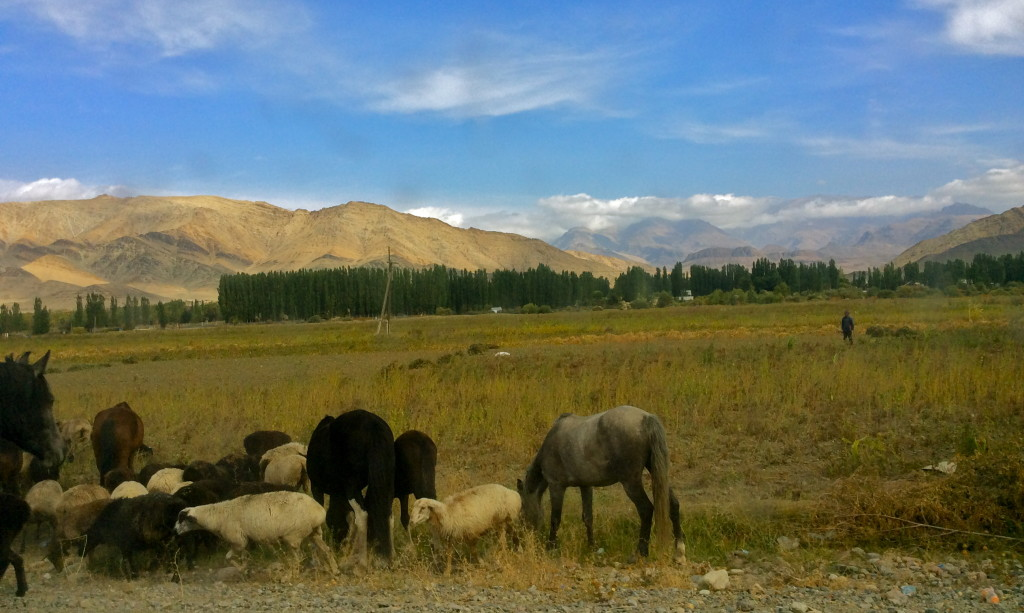 Talas wildlife and scenery...Kyrgyzstan