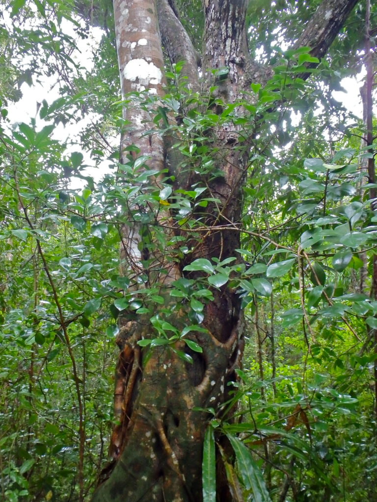 Soroa's old growth rainforest eco-tourism in cuba where to go hiking in cuba?