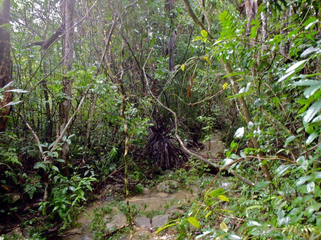 Soroa Rainforest hiking in cuba travel blog for solo female travellers tourist towns in cuba