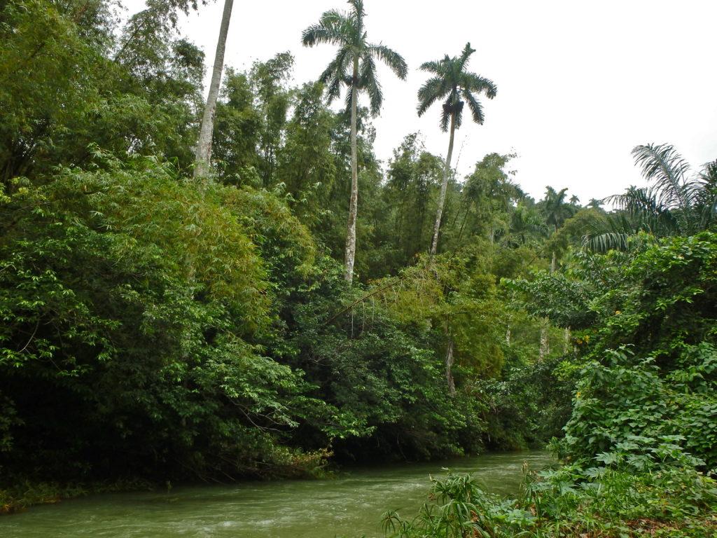 Soroa Rainforest of cuba where to go trekking in cuba best hiking in cuba day hikes in soroa cuba