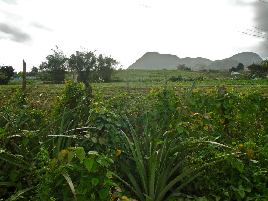 Soroa's Farmland day hiking in cuba soroa travel blog for solo female tourist attractions in soroa cuba