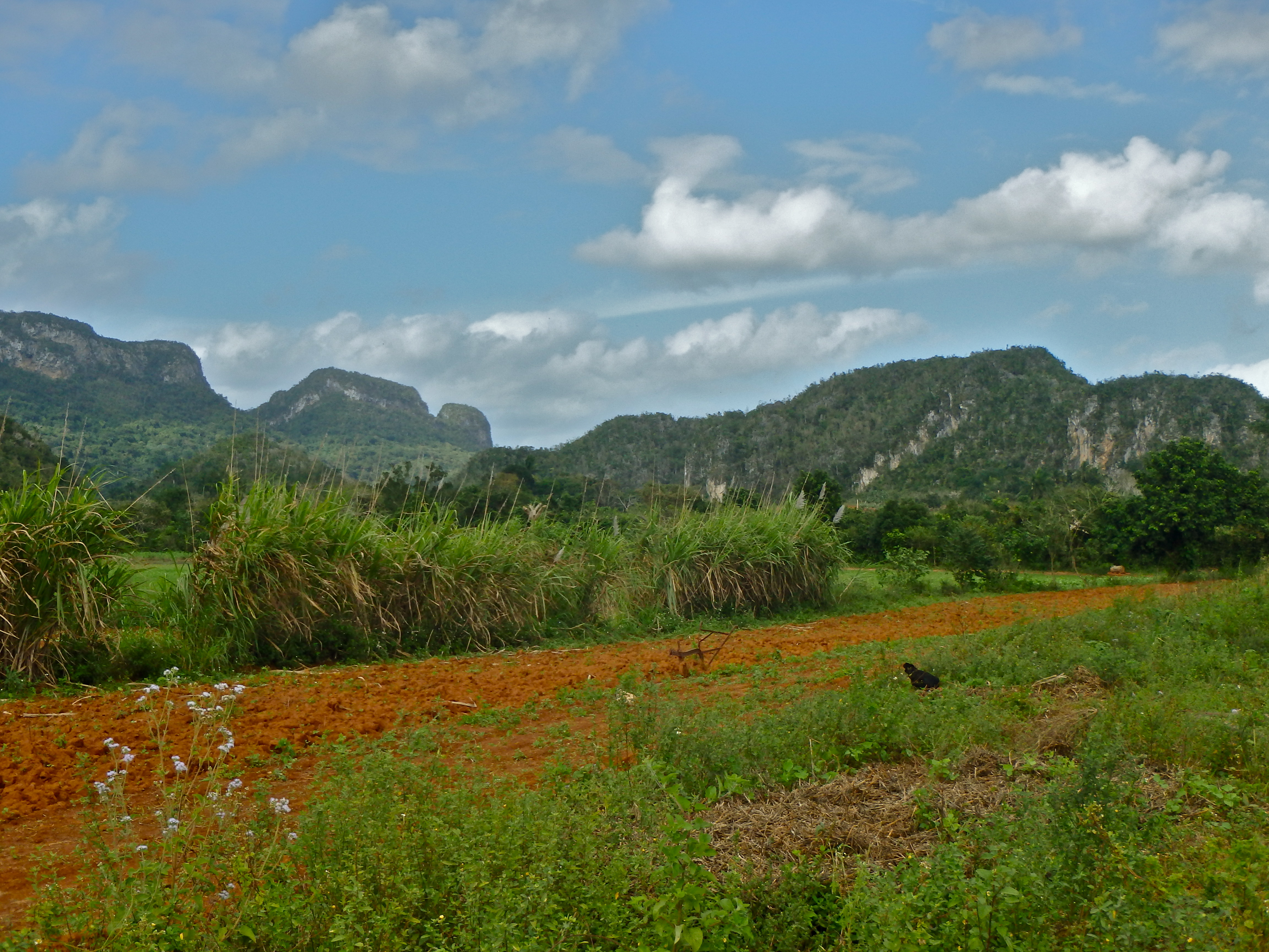 Vinales Valley, Cuba things to do in vinales valley cuba best places to visit in cuba top towns to visit in cuba