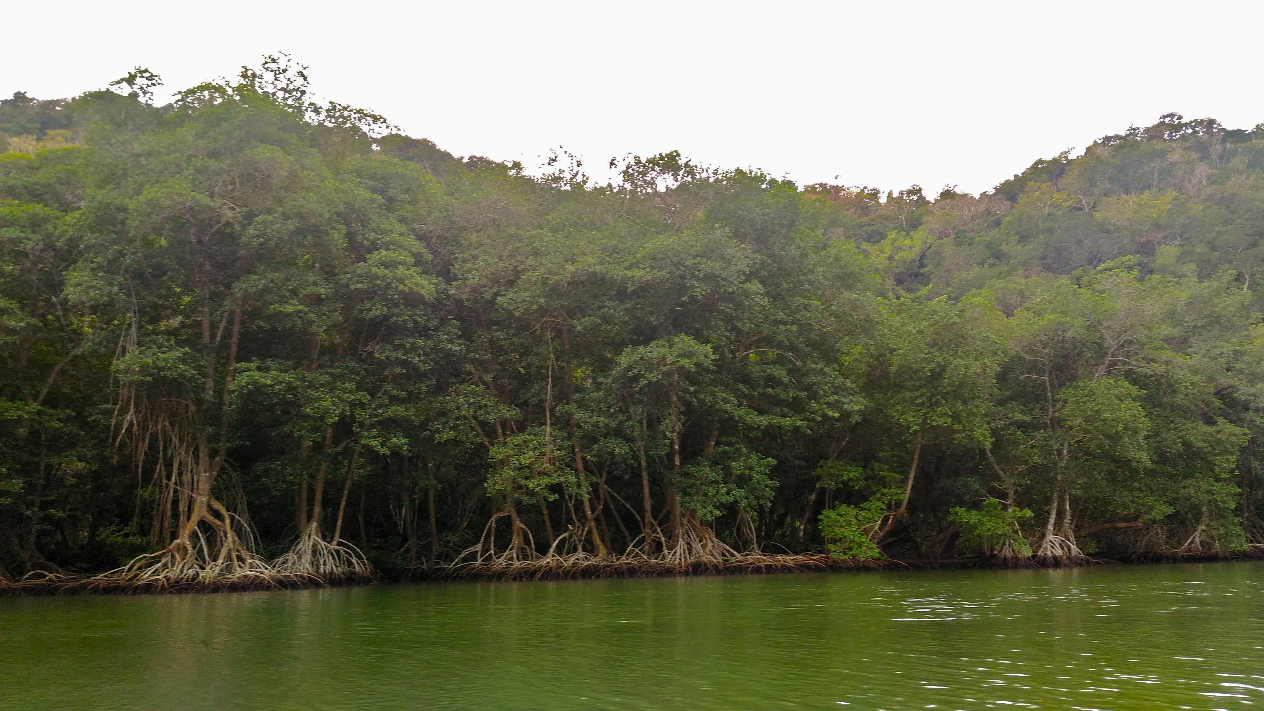 Mangroves along the Rio Canimar nature boat ride activities near varadero top things to do near varadero