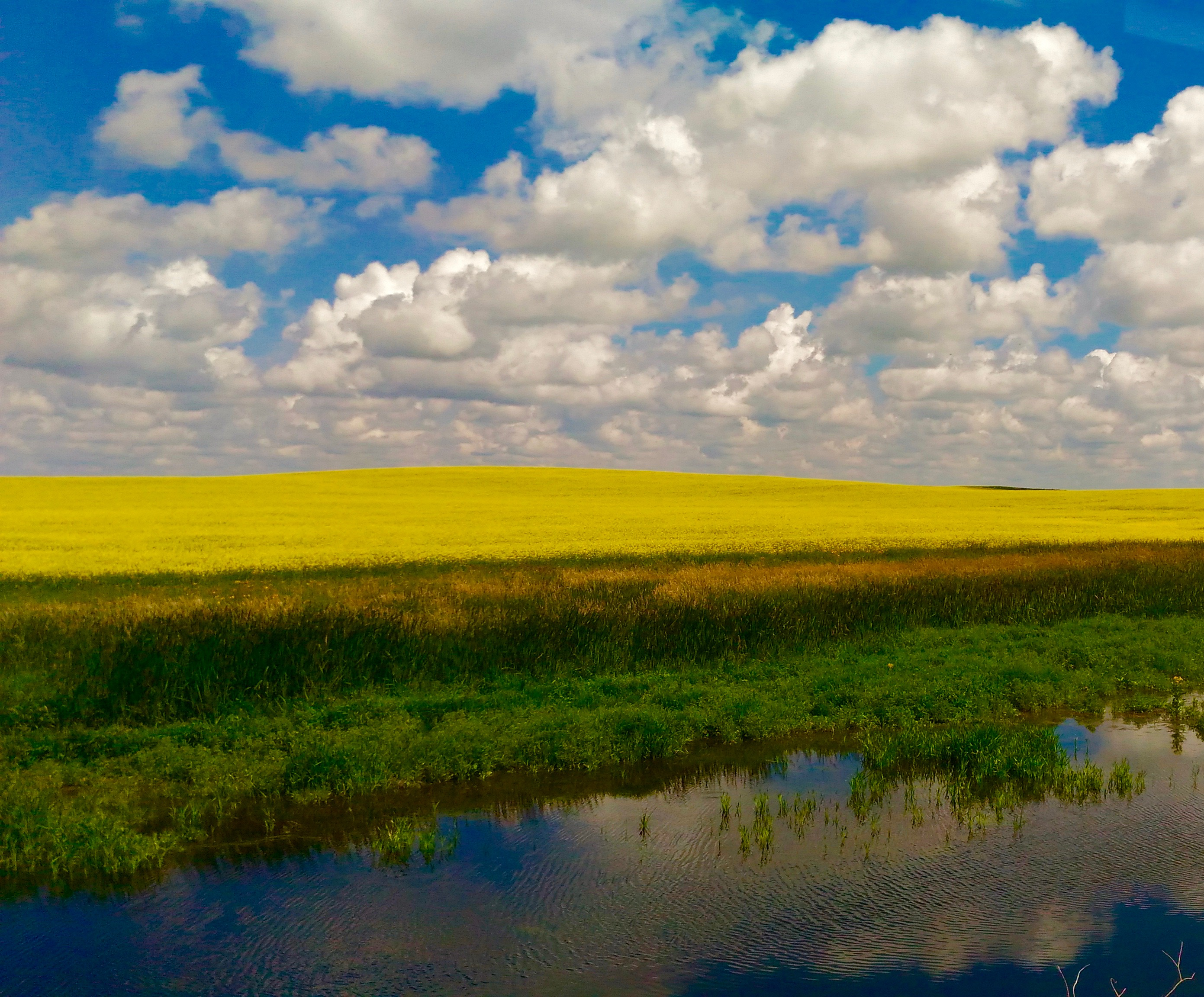 Canola fields in Southern saskatchewan, best family attractions in regina Things to do in Regina Saskatchewan