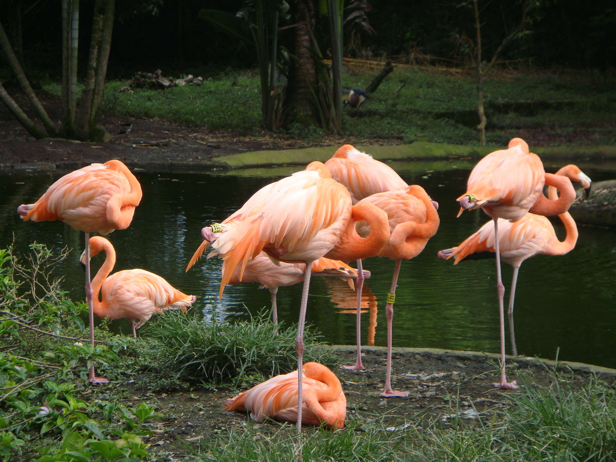 matecana zoo best places to see in Colombia