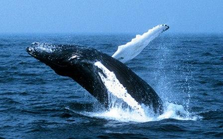nuqui whale watching top sights in Colombia