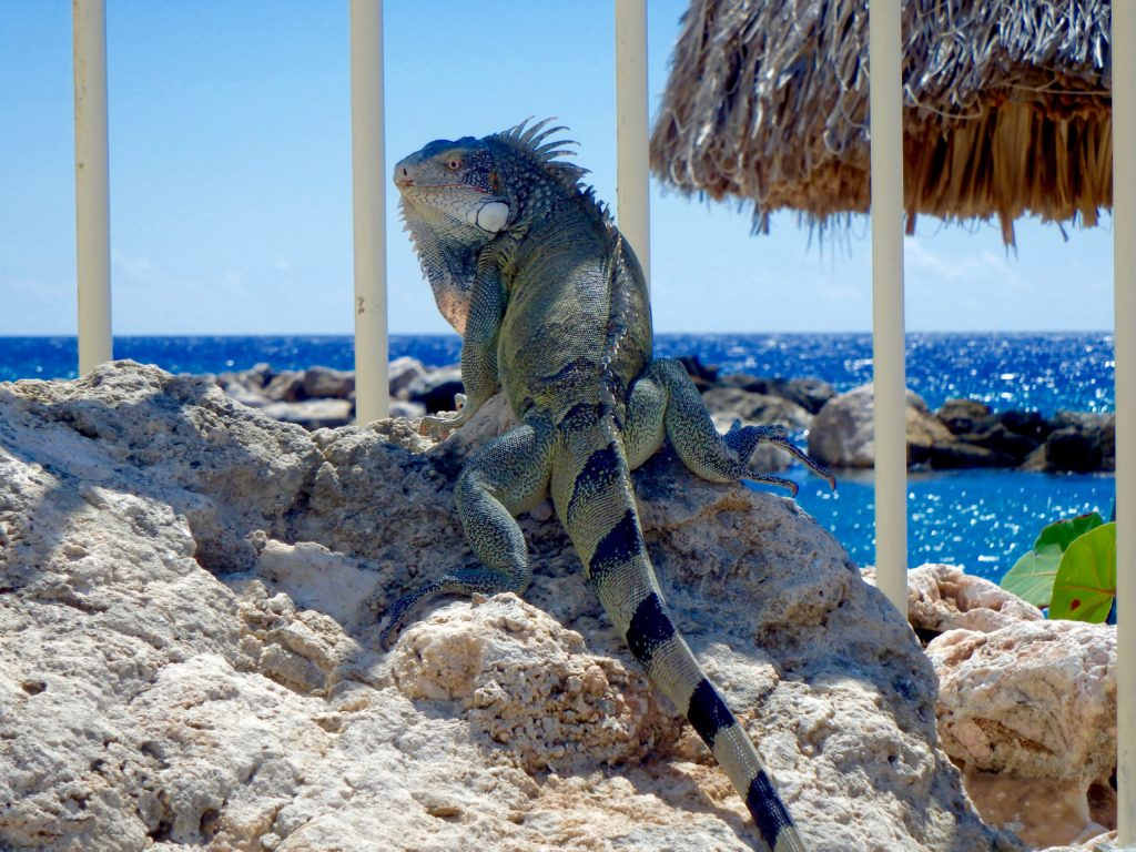 what to do in 4 days in curacao travel blog for solo female travel curacao places to stay curacao places to eat