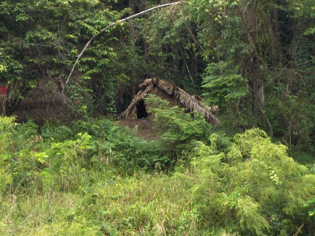 hiking in teman negara malaysia best treks in malaysia where to see wildlife in malaysia