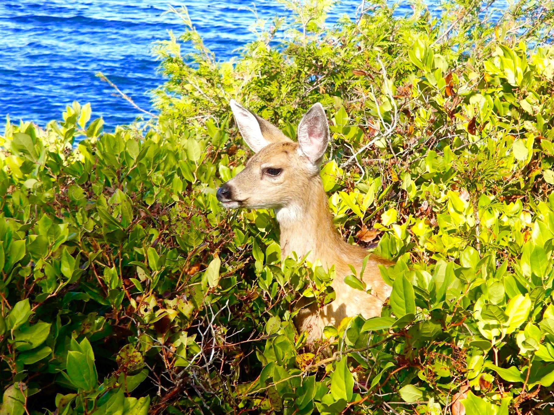 wildlife on Galiano island british columbia nature experience best family holiday destinations BC