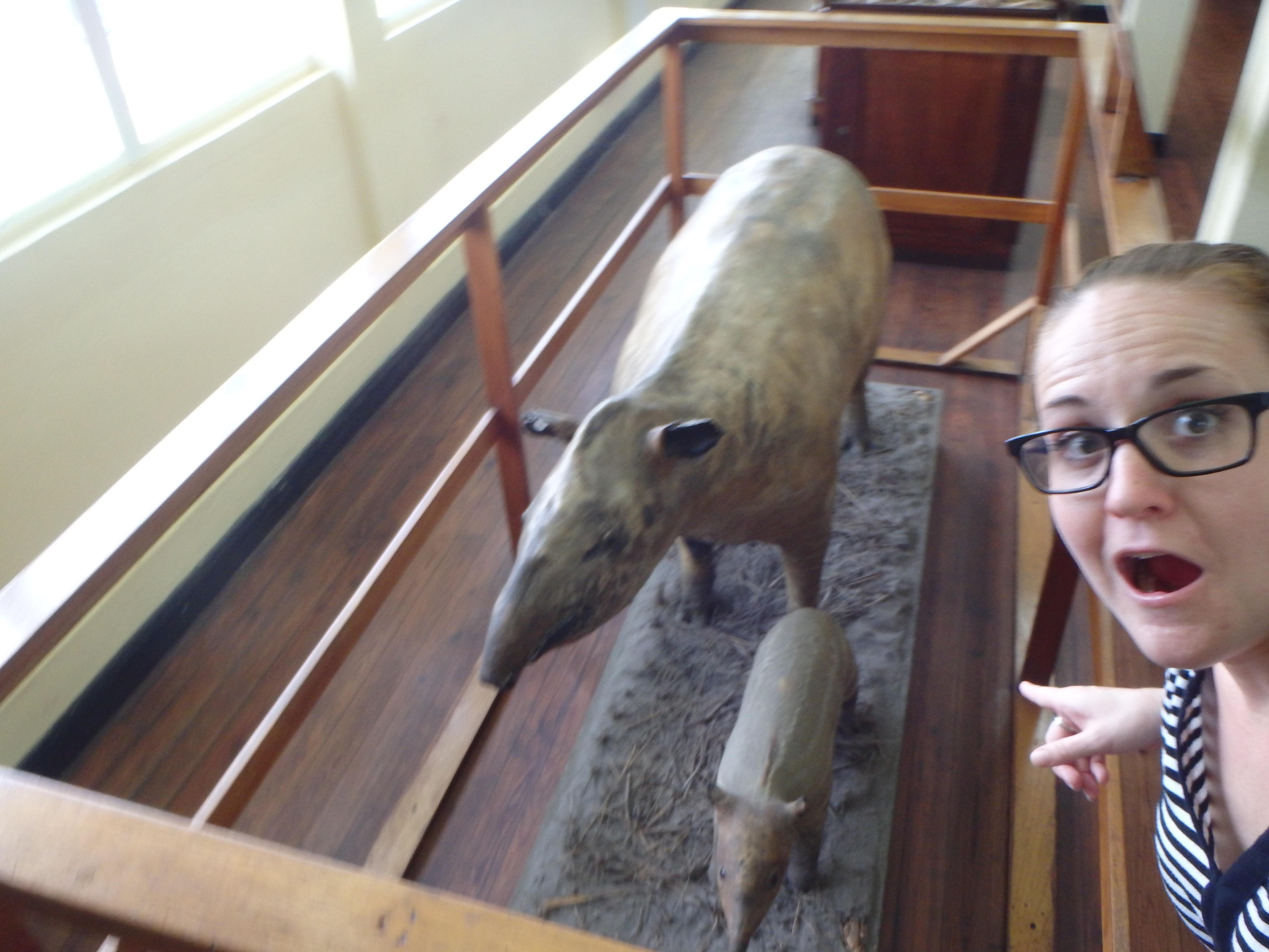 animals of guyana guyana culture and history travel blog