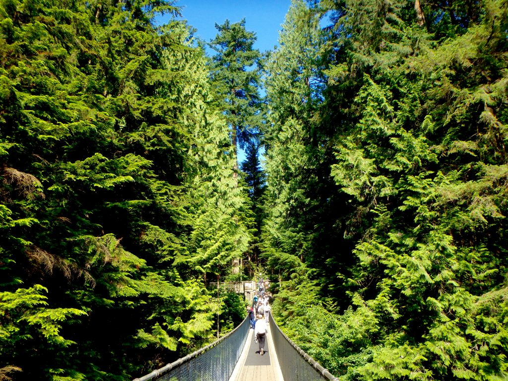 Capilano Suspension bridge in North Vancouver canada west coast rain forests