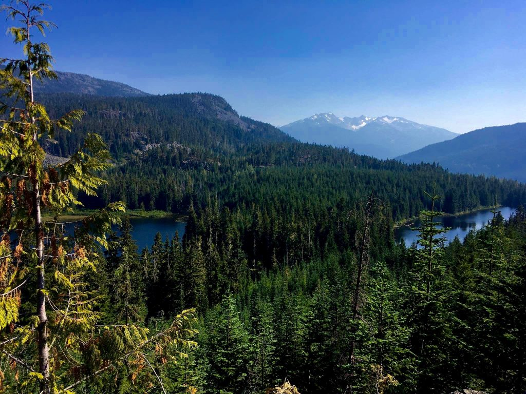 view from cougar mountain in whistler things to do in whistler bc