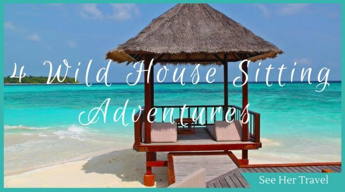 4 Wild House sitting adventures